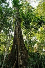 Carara Rainforest Costa Rica